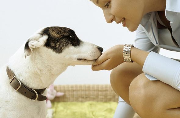 Choosing The Right Pet Supplies