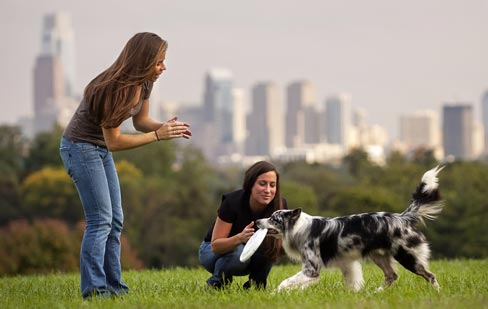 Happy Pet at Home With Puppy Training Tips
