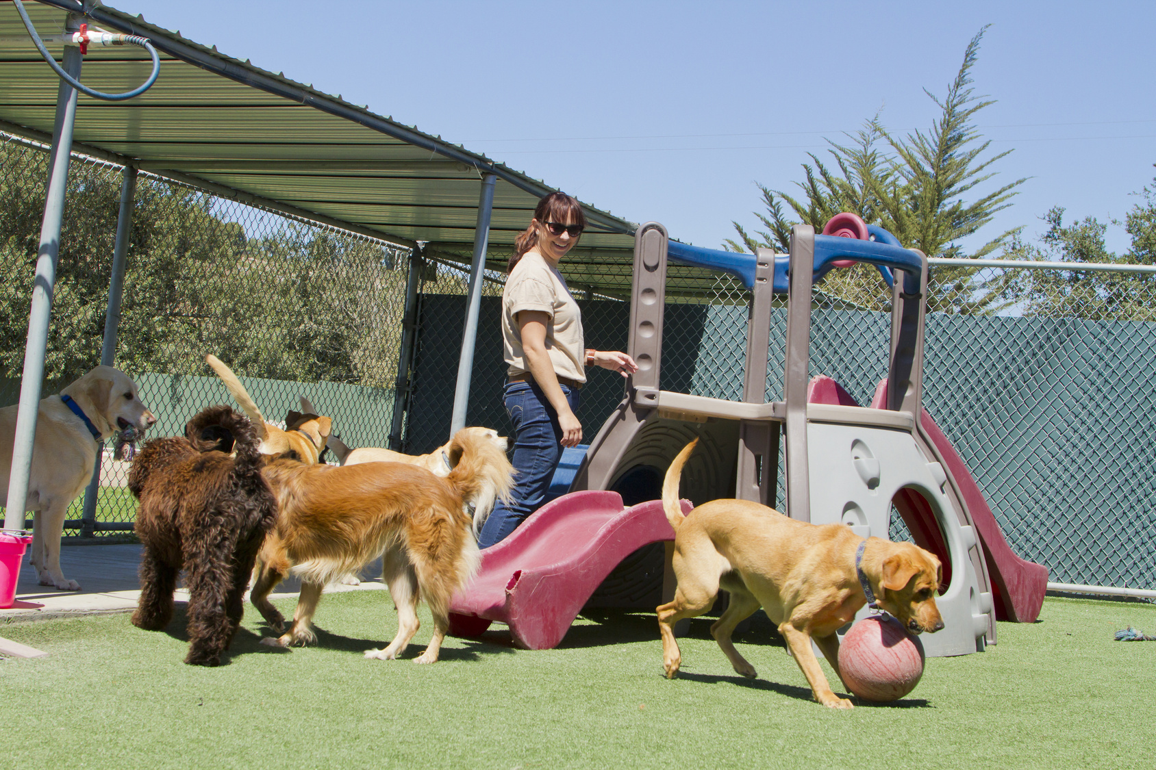 How To Choose The Right Boarding Kennel For Your Pet