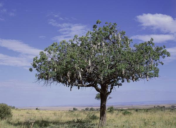 Tips For Trees To Consider For Dry Climates
