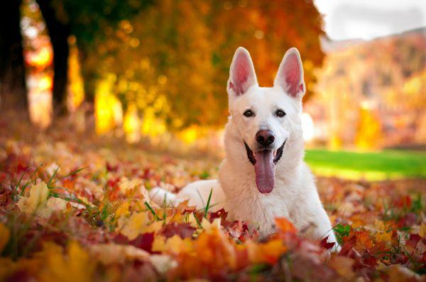 Pets The Best Emotional Development For Children's
