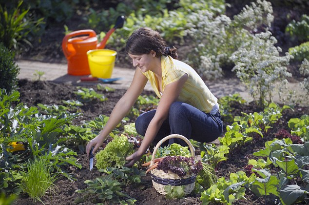 People Can Enjoy Their Own Garden Fruits and Vegetables