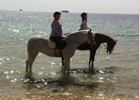 How To Choose The Proper Outfit and Equipment For Your Arabian Horse