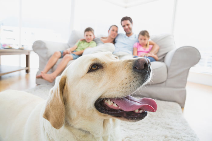 Getting Ready For Your New Dog
