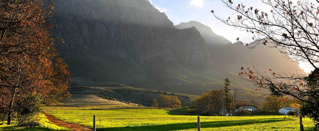South Africa Safari Boosting The Country's Economy