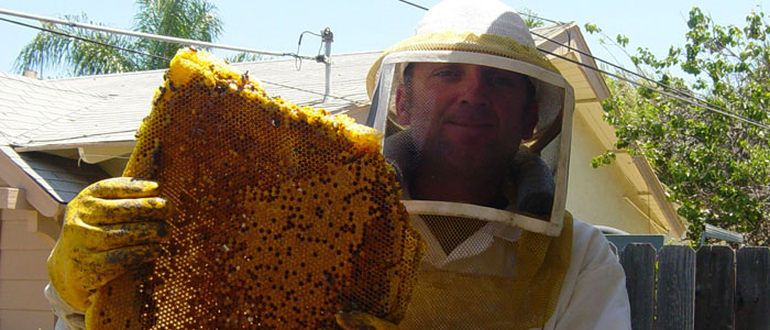 All You Need To Know About Bee Busters