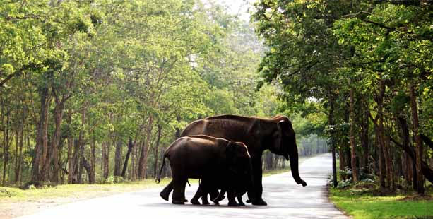 Wayanad: A Short Travel Guide To A Natural Heaven In Kerala