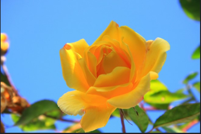 Natural Beauty: TOP 7 Practical Recommendations To Grow Roses
