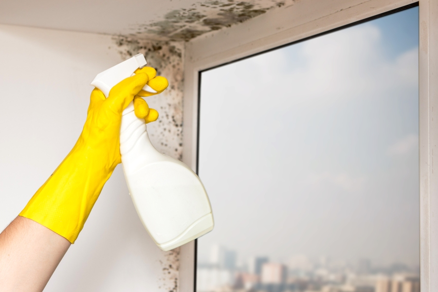 6 Ways To Protect Your Home From Mold!