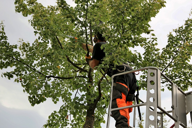 Tree Pruning Guide: What Are The Tips For Perfect Tree Pruning?
