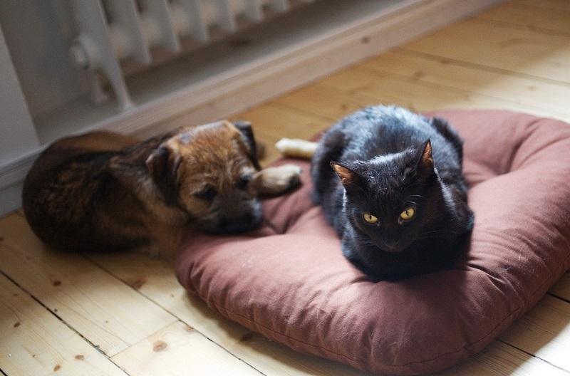 Treating Pet