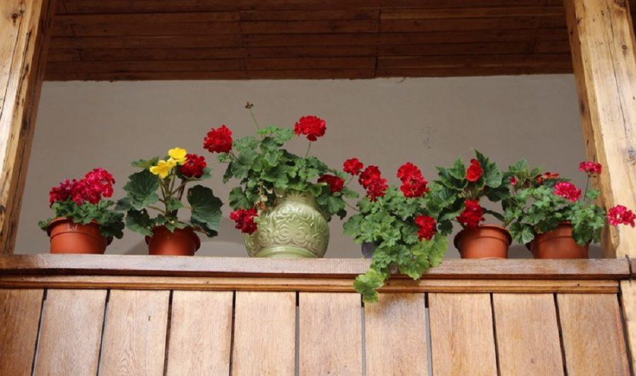 Balcony Plant Pot: Add Beauty To Your Balcony