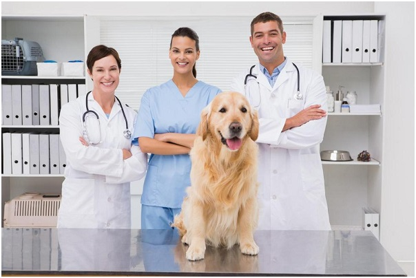 How To Choose The Right Veterinarian For Your Multi-Pet Household